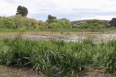 Réservation et réserve naturelle de marécages de nature Photographie stock