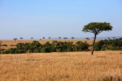 Réservation Kenya Afrique de Mara de masai de plaines Photos libres de droits