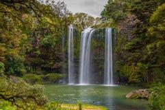 Réservation scénique entourant la cascade célèbre de Whangerei 26 m photo stock