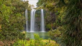 Réservation scénique entourant la cascade célèbre de Whangerei 26 m photo libre de droits