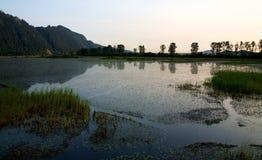 Réserve écologique de Polder de Pitt Images stock