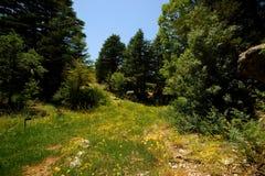 Réserve de cèdre, Tannourine, Liban Photo libre de droits