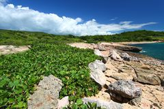 Réserve de Guanica - Porto Rico Photos stock