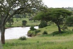 Réserve de stationnement de fleuve de l'Afrique Tanzanie Tarangire Images libres de droits