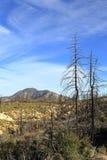 Réserve forestière d'Angeles images libres de droits