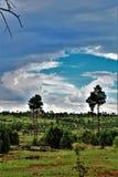 Réserve forestière d'Apache-Sitgreaves, Arizona, Etats-Unis photographie stock libre de droits