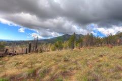 Réserve forestière d'AZ-Coconino photo libre de droits