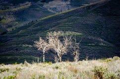 Réserve forestière d'Uinta, Utah Image stock