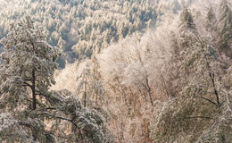 Réserve forestière de Chattahoochee image libre de droits