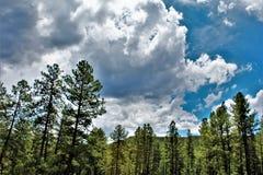 Réserve forestière de Tonto, ministère de l'agriculture de l'Arizona, Etats-Unis Photos stock