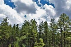 Réserve forestière de Tonto, ministère de l'agriculture de l'Arizona, Etats-Unis Photos libres de droits