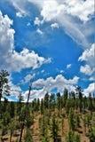 Réserve forestière de Tonto, ministère de l'agriculture de l'Arizona, Etats-Unis Image stock