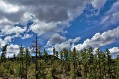 Réserve forestière de Tonto, ministère de l'agriculture de l'Arizona, Etats-Unis Images libres de droits