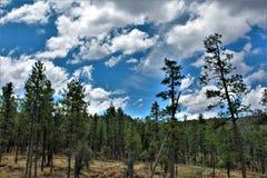 Réserve forestière de Tonto, ministère de l'agriculture de l'Arizona, Etats-Unis Photographie stock libre de droits