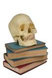 réserve le crâne humain images libres de droits