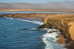 Réserve nationale de Paracas au Pérou Image libre de droits