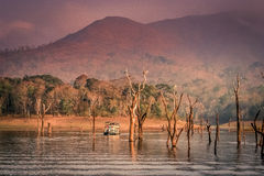 Réserve nationale de Periyar Photographie stock