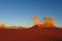 Réserve naturelle de couche-point de Namib (Namibie) Image libre de droits