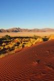 Réserve naturelle de couche-point de Namib (Namibie) Images stock