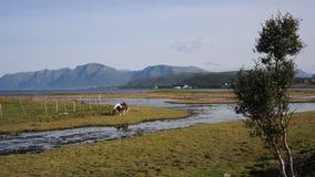 Réserve naturelle de Vikosen Photographie stock libre de droits