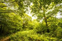 Réserve naturelle du bois antérieure, Crowhurst, le Sussex est, Angleterre image stock