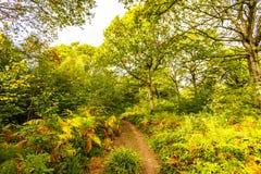 Réserve naturelle du bois antérieure, Crowhurst, le Sussex est, Angleterre photos stock