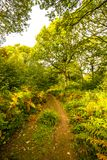 Réserve naturelle du bois antérieure, Crowhurst, le Sussex est, Angleterre images stock