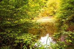 Réserve naturelle du bois antérieure, Crowhurst, le Sussex est, Angleterre image libre de droits