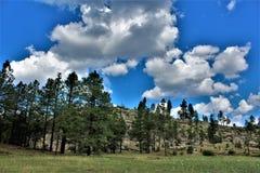 Réserves forestières d'Apache Sitgreaves, Arizona, Etats-Unis photographie stock libre de droits