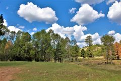 Réserves forestières d'Apache Sitgreaves, Arizona, Etats-Unis image stock