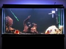 réservoir de cichlid Photos libres de droits