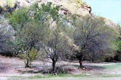Réservoir de lac Saguaro, le comté de Maricopa, Arizona, Etats-Unis Images libres de droits