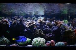 Réservoir de poissons Photo libre de droits