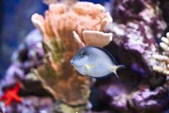 Réservoir de poissons marin d'aquarium Photos stock