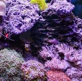 Réservoir de récif, aquarium marin complètement de poissons et usines Réservoir rempli avec de l'eau pour garder les animaux sous photo libre de droits