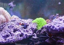 Réservoir de récif, aquarium marin complètement de poissons et usines Réservoir rempli avec de l'eau pour garder les animaux sous photo stock