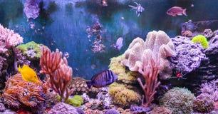 Réservoir de récif, aquarium marin complètement de poissons et usines Réservoir rempli avec de l'eau pour garder les animaux sous image stock