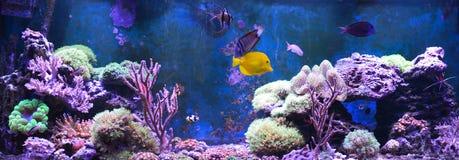 Réservoir de récif, aquarium marin Réservoir rempli avec de l'eau pour garder les animaux sous-marins vivants Gorgonaria, fan de  photos stock