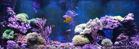 Réservoir de récif, aquarium marin Réservoir rempli avec de l'eau pour garder les animaux sous-marins vivants Gorgonaria, fan de  photo libre de droits