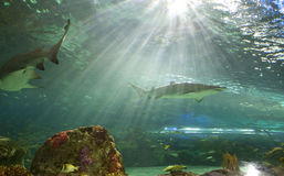 Réservoir de requin au Canada de l'aquarium de Ripley Photo libre de droits