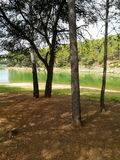 Réservoir pratiquement sec avec beaucoup de pins images libres de droits