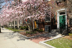 Résidences d'étudiant à l'université de Boston photos stock
