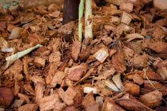 Résidu de noix de coco Images libres de droits