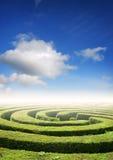 Résolution des problèmes de labyrinthe de haie Photographie stock libre de droits
