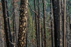 Résultats de Forest Fire Images libres de droits