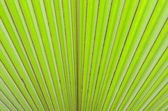 Résumé de fond en feuille de palmier vert de nature Image libre de droits