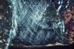 Résumé, micrographe de polarisation montrant des détails d'un ver de terre photographie stock libre de droits