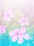 Résumé trouble de la fleur et du fond coloré Photographie stock