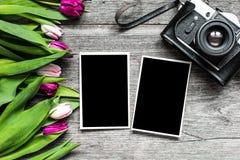 Rétro appareil-photo de vintage avec les cadres vides et la tulipe pourpre la Floride de photo Images libres de droits