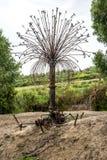 Rétro arbre de robinet d'eau près de lac McNess de loch dans Yanchep P national Photo libre de droits